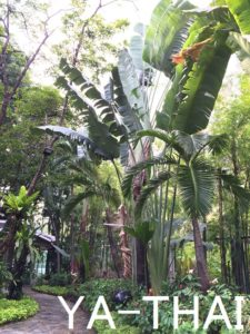 MDダイエット 植物